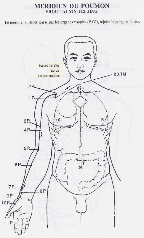 Méridien du poumon